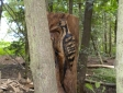 campton-wood-031
