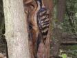 campton-wood-033