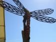 dragon-fly-hampshre