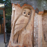 Owl - wildlife tree